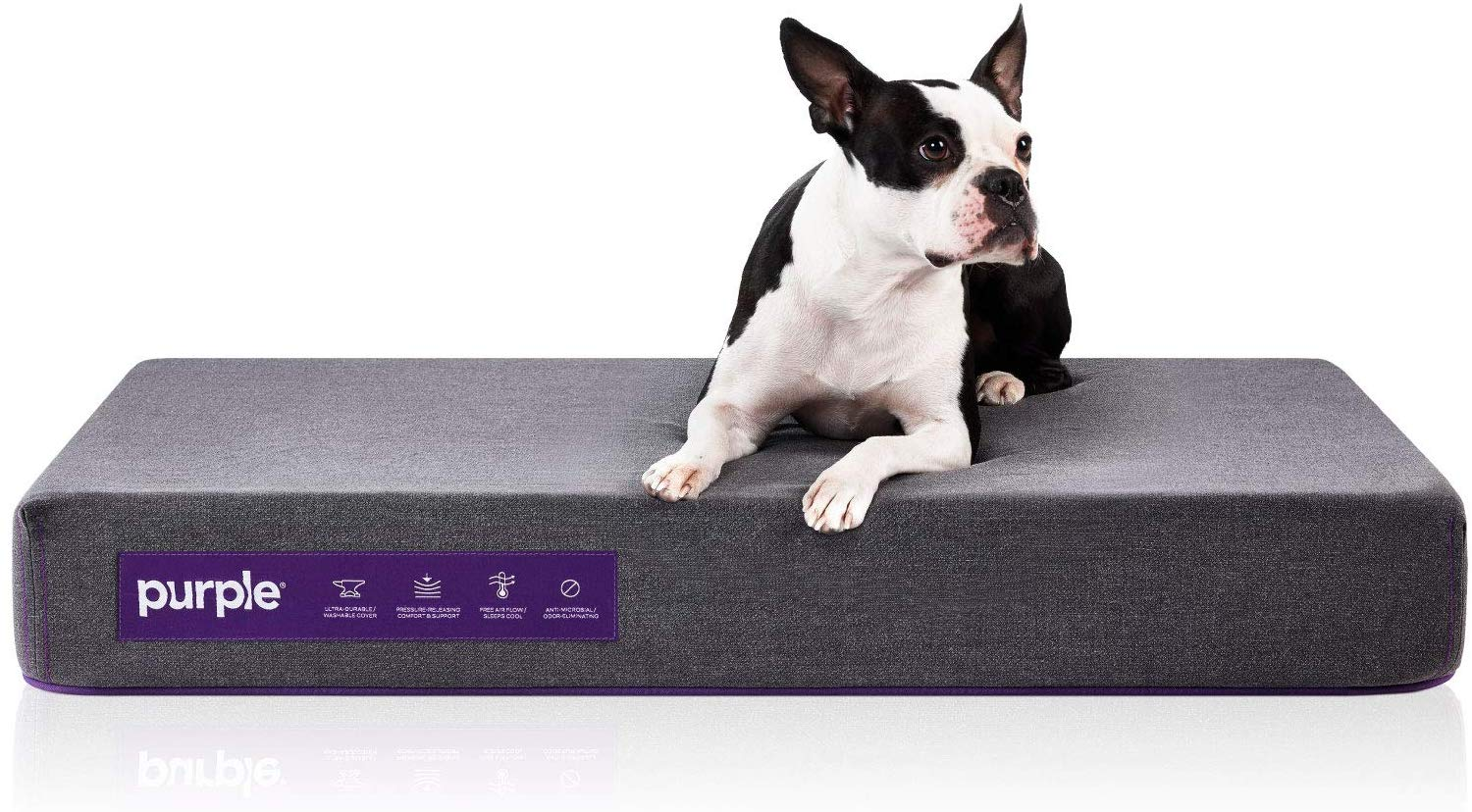 The-Purple-Pet-Bed